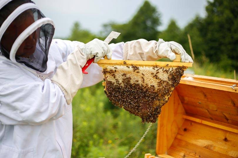 Beekeeper maintaining the hives at Honey Creek Resort